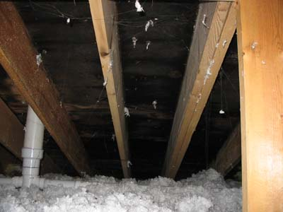 Attics Mold In Attic From Poor Ventilation Clean Air