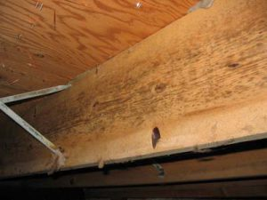 Home Mold Inspection Clean Air Sciences