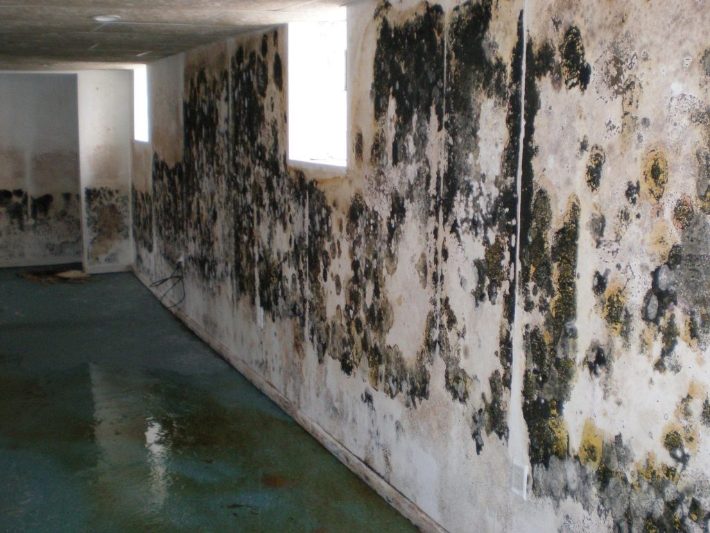 Really Heavy Mold Growth